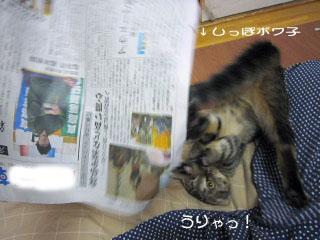 npcat.jpg