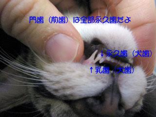 白い歯.jpg