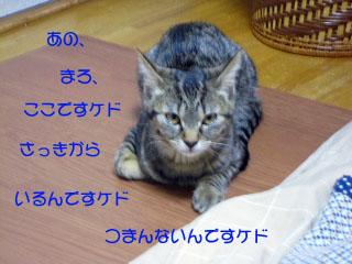 conv0003のコピー.jpg