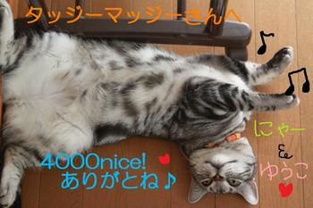 m_4000nice!20(2)-b5678.jpg