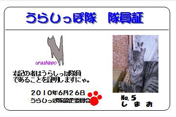 urashippo-no.5-shimao.jpg